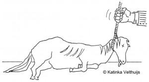 Dood paard